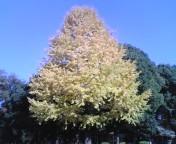 2008_1201_092.jpg